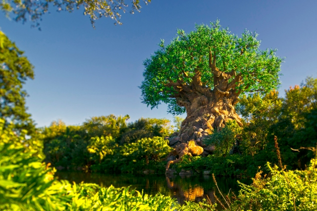 Visit Disney's Animal Kingdom Theme Park and see the Tree of Life in 2019